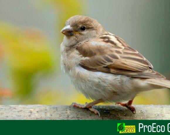 El mundo se está quedando sin pájaros, revela estudio