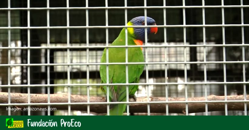 Aprobado en primer debate el proyecto de ley para prohibir la tenencia de aves enjauladas