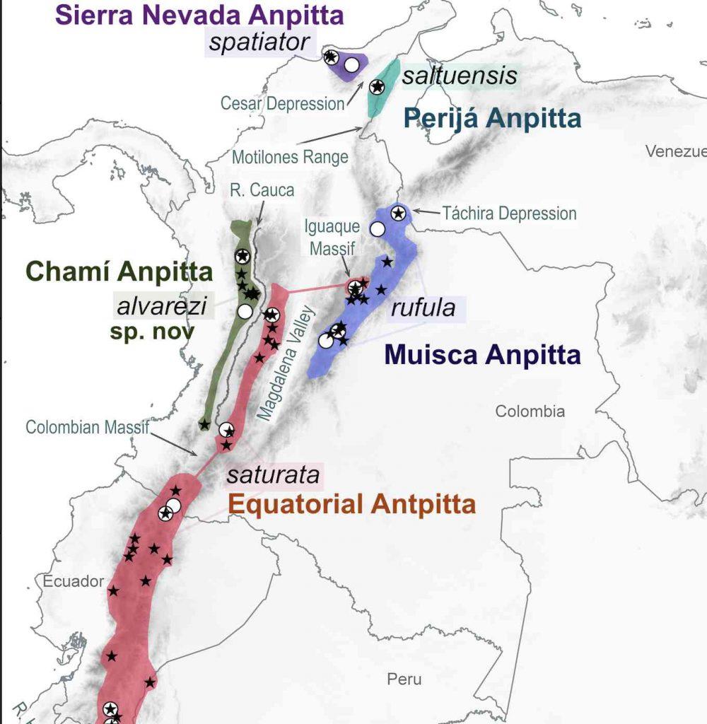 La zona de color verde es el hábitat de esta nueva especie de ave. Mapa revelado por Andrés Cuervo.